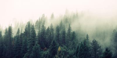 sisli orman